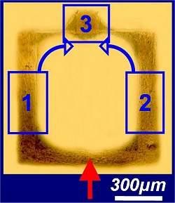 Neurônios são usados para construir circuito de neurocomputador