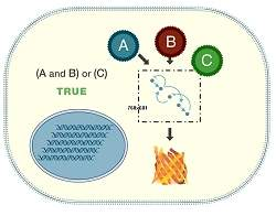 Computador biológico faz cálculos dentro de uma célula viva