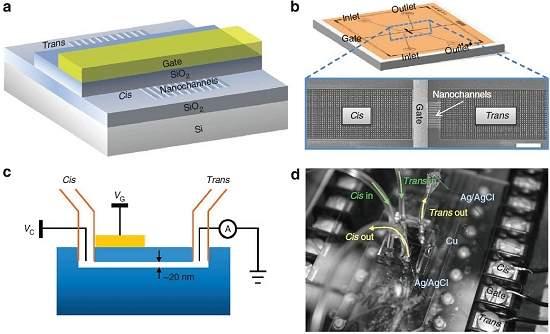 Diodo nanofluídico une mundos eletrônico e biológico