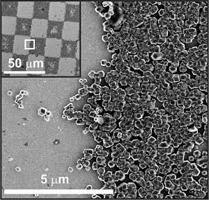 Bactérias magnéticas inspiram criação de biocomputadores