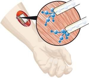 Bioeletrônica: Primeiro circuito integrado químico controla neurônios