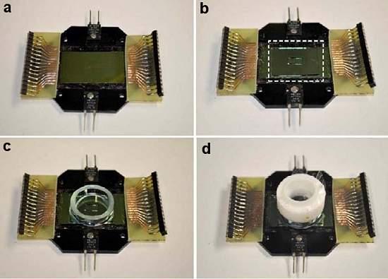 Tecidos ciborgues misturam biológico e eletrônico
