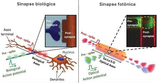 Cérebro artificial de luz com neurônios fotônicos