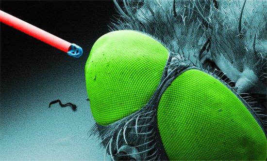 Microcâmera pode ser injetada com uma seringa