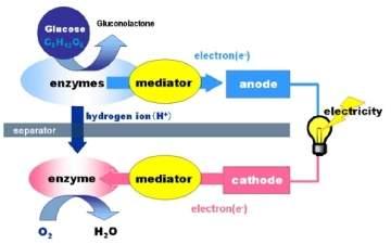 Bio-bateria gera energia a partir de açúcar
