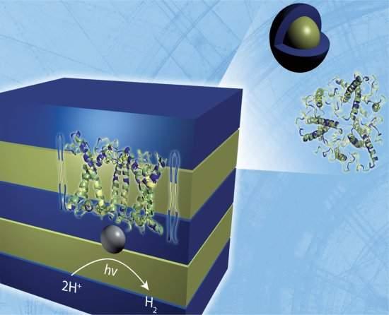 Material biossintético transforma luz do Sol em hidrogênio