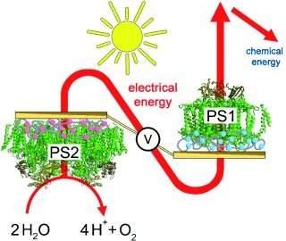 Biocélula híbrida usa materiais biológicos e sintéticos