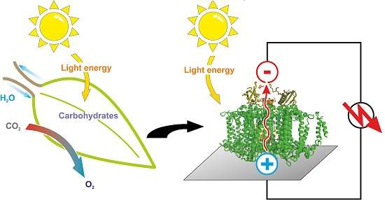 Folha artificial gera energia fazendo fotossíntese natural