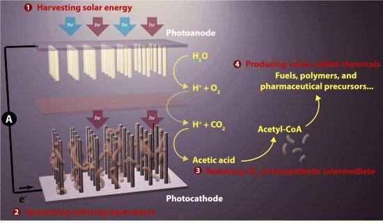 Grande avanço na fotossíntese artificial