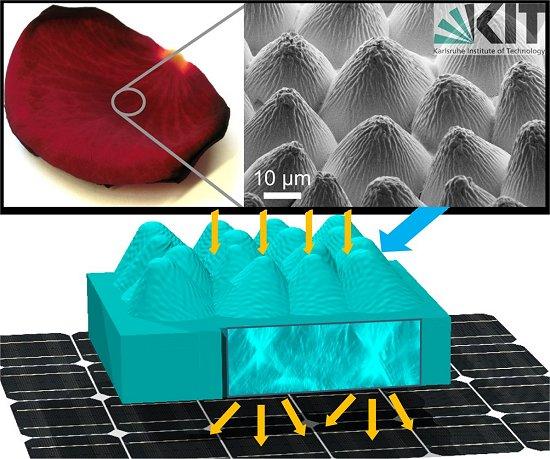 Pétalas de rosa aumentam eficiência de células solares