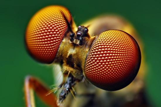 Olho de inseto inspira painéis solares eficientes e belos