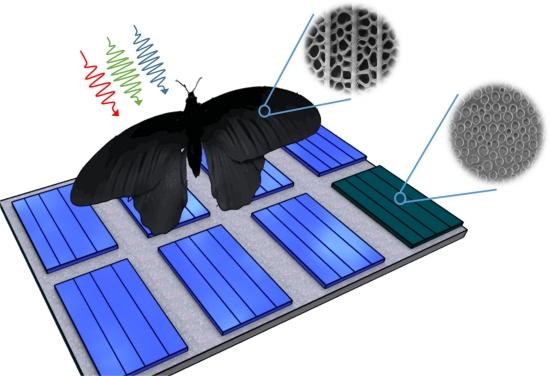 Asa de borboleta aumenta absorção de células solares em 200%
