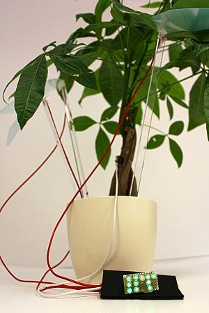 Plantas geram eletricidade para acender 100 LEDs
