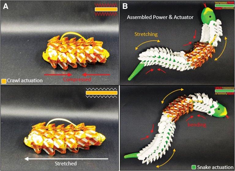 Bateria que imita escama de cobra é flexível e extensível