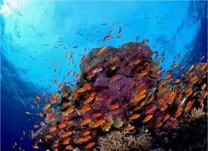 Amazônia Azul: um oceano tão rico quanto a Amazônia verde