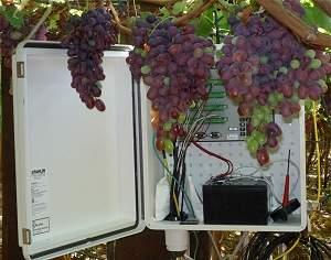 Satélites monitoram plantação de uva em busca do vinho ideal