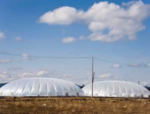 Fábricas vegetais sustentáveis erguem-se à sombra de Fukushima