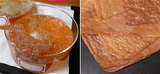 Resíduo de chá vira substituto sustentável do couro