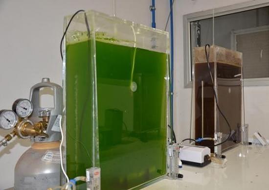Embrapa identifica microalgas que geram biocombustíveis