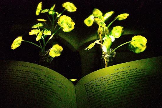 Cientistas criam plantas que brilham como em Avatar
