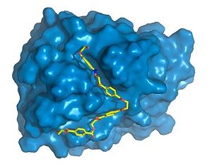 Brasileiros ajudam a melhorar enzima que come PET