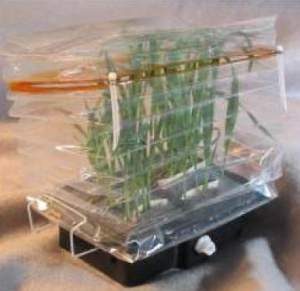 Astronauta europeu vai cultivar plantas no espaço