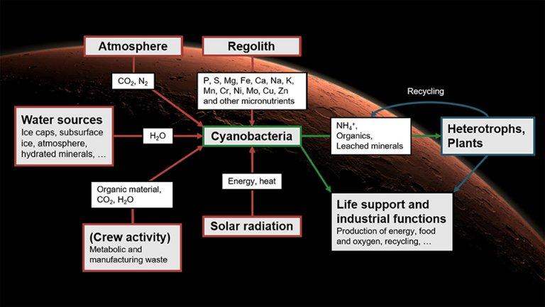Algas cultivadas em Marte podem sustentar col