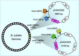 Grave seus dados no DNA de uma bactéria e deixe-os passar de geração em geração