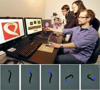 Videogames bióticos controlam seres vivos em tempo real