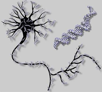Primeira rede neural artificial feita com moléculas de DNA