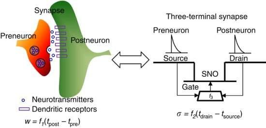 Transístor sináptico vai além da lógica binária