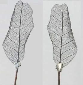 Cientistas criam folhas magnéticas