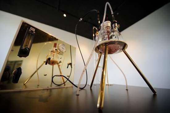 Neo-alquimia: bactéria produz ouro artisticamente