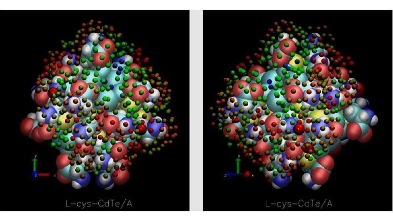 Brasileiros ajudam a criar enzima sintética com ponto quântico