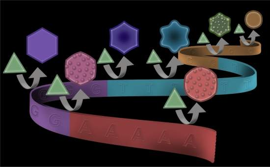 DNA metálico: código genético molda síntese de nanopartículas