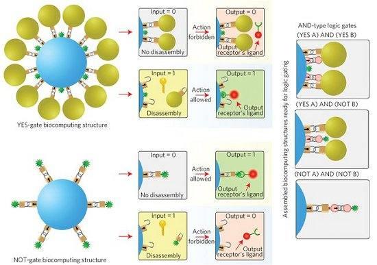 Biocomputação: caminho para os nanorrobôs médicos