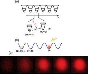 Efeito do Observador confirmado: átomos não se movem se você estiver olhando