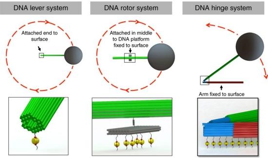 Nanorrobôs de DNA controlados instantaneamente com magnetismo