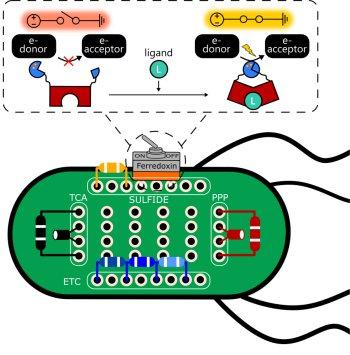 Está pronto primeiro gerador de energia para uma célula sintética