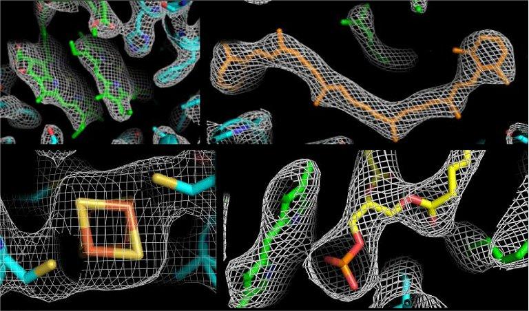 Raios X ultracurtos começam a filmar a fotossíntese