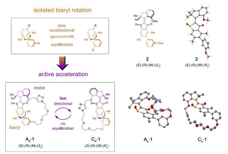 Motor molecular ganha um câmbio para transferir movimento