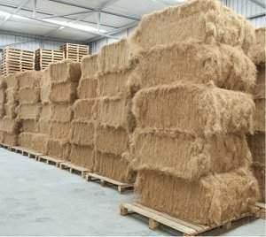 Indústria do coco cresce, mas alto desperdício gera desafio tecnológico