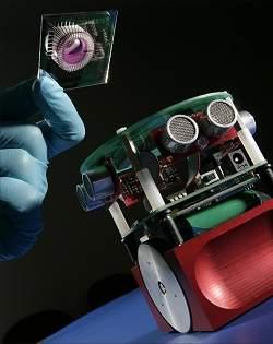 Robô é controlado por cérebro biológico artificial