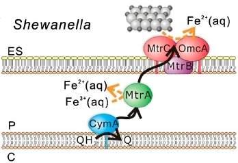 Cientistas fazem conexão elétrica com células vivas
