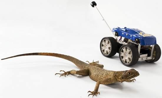 Robô com rabo salta como lagarto quando a coisa aperta