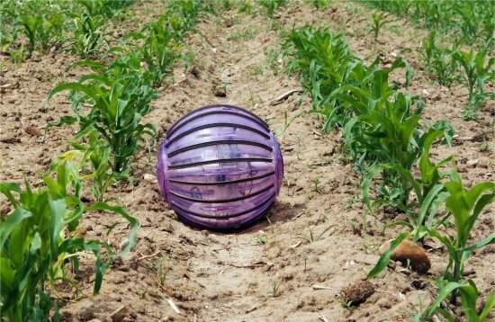 Robô esférico inspeciona lavouras em agricultura de precisão