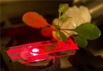 Plantas biônicas capturam mais luz e detectam poluentes