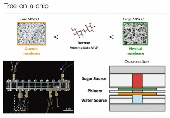 Chip que imita plantas bombeia água sem gastar eletricidade