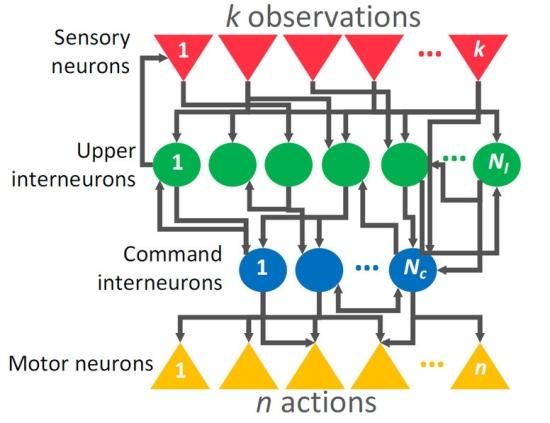 Inteligência artificial estaciona carro usando 12 neurônios