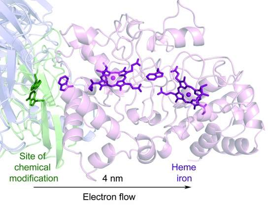 Cientistas descobrem como a eletricidade move-se através das  células